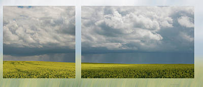 Photograph - Thunderstorm Over The Canola by Karen Rispin