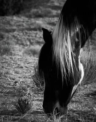 Photograph - Tierra by Catherine Sobredo