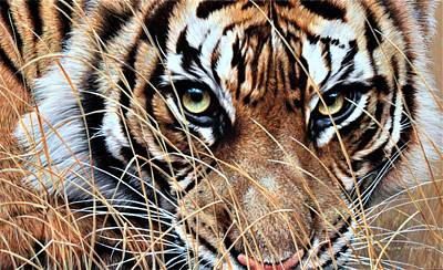 Painting - Tiger Eyes by Alan M Hunt by Alan M Hunt