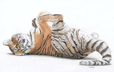 Animals Drawings - Tiger Feet by Peter Williams