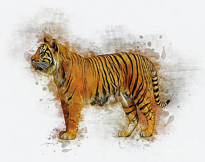 Digital Art - Tiger by Ian Mitchell