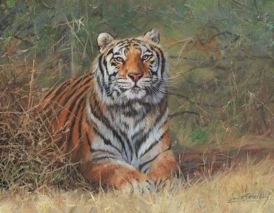 Painting - Tiger In Bush by David Stribbling