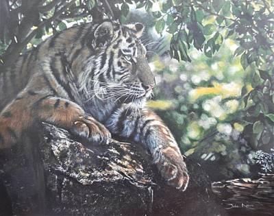 Painting - Shady Tiger by John Neeve
