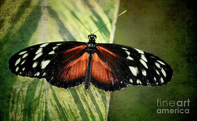 Mixed Media - Tiger Longwing Butterfly by Elaine Manley