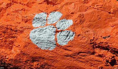 Photograph - Tiger Paw by Lisa Wooten