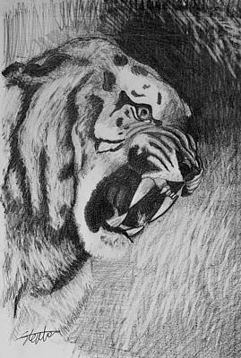 Animals Drawings - Tiger Sketch by Stephen Humphries