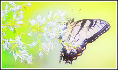 Digital Art - Tiger Swallowtail Butterfly On Privet Flowers by A Gurmankin