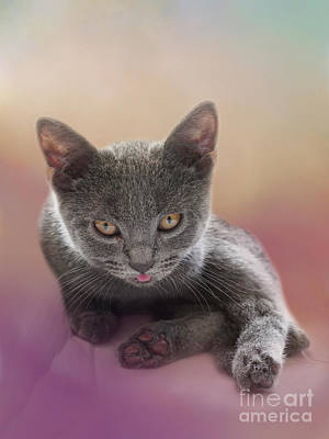 Chartreux Wall Art - Photograph - Tiny Chartreux Kitten by Elisabeth Lucas