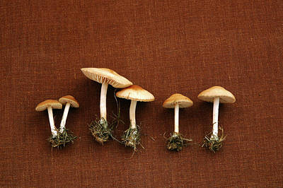 Photograph - Tiny Mushrooms by Hd Connelly