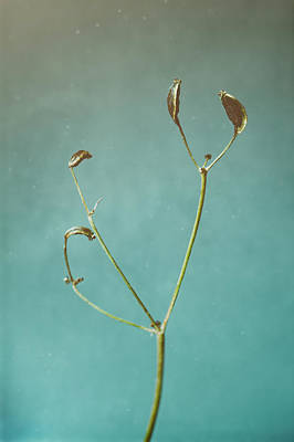 Food And Flowers Still Life Rights Managed Images - Tiny Seed Pod Royalty-Free Image by Scott Norris