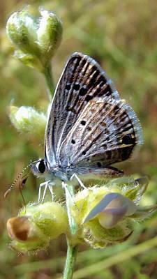 Digital Art - Tiny Silver Butterfly On Fuzzy Wildflower by Shelli Fitzpatrick