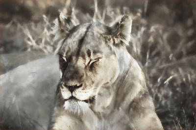 Photograph - Tired Lioness by Kay Brewer