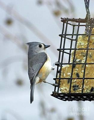 Photograph - Titmouse 14 by Lizi Beard-Ward