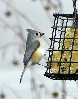 Photograph - Titmouse 15 by Lizi Beard-Ward
