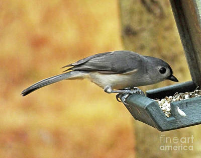 Photograph - Titmouse 16 by Lizi Beard-Ward