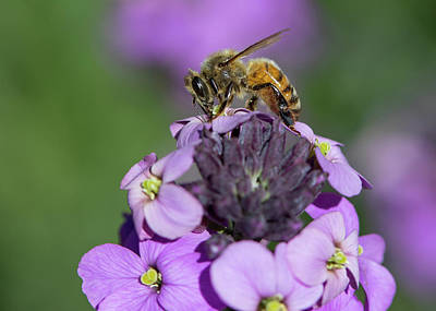 Royalty-Free and Rights-Managed Images - To Bee or Not by Rebecca Cozart