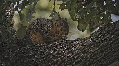 Photograph - To Cute To Be Perfect 20181022 by Philip A Swiderski Jr