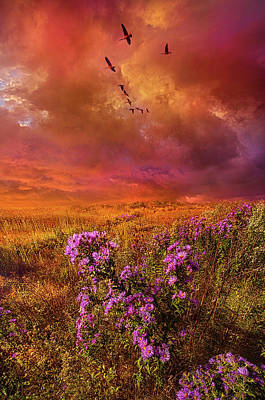Royalty-Free and Rights-Managed Images - To Rise Above by Phil Koch