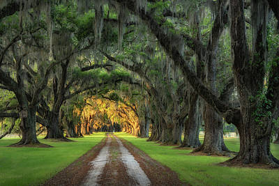 Photograph - Tomotley Plantation Avenue Of Oaks by Darylann Leonard Photography