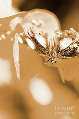 Moth Wall Art - Photograph - Toned Tropics by Jorgo Photography - Wall Art Gallery