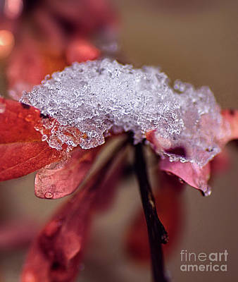 Photograph - Tones Of Winter by Susan Warren