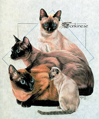 Drawing - Tonkinese by Barbara Keith