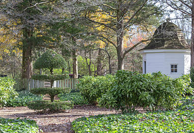 Photograph - Topiary In Colonial Williamsburg by Teresa Mucha