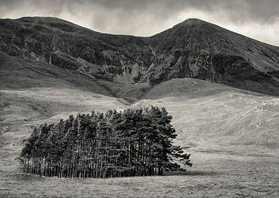 Torridon Wall Art - Photograph - Torridon Trees by Dave Bowman