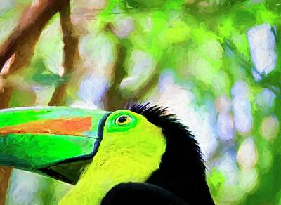 Photograph - Toucan Corner by Alice Gipson
