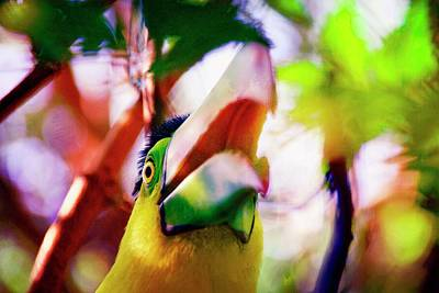 Photograph - Toucan Kewl by Alice Gipson