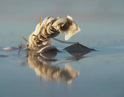 Photograph - Tower Shell Monster by David Bader