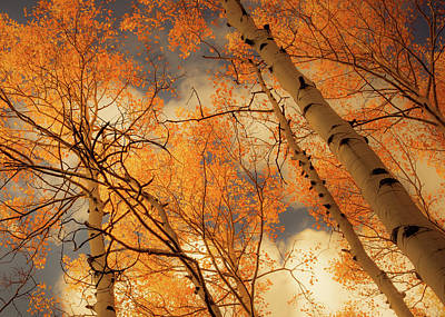 Photograph - Towering Aspens by Don Schwartz