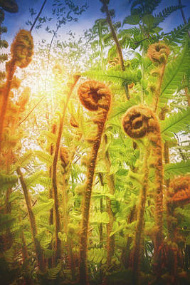 Royalty-Free and Rights-Managed Images - Towering Fern by Carol Japp