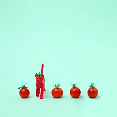 Standing Photograph - Toy Cat Painted Like A Tomato In Row by Juj Winn