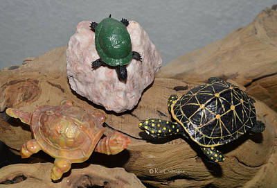 Photograph - Toy Turtle Confab by Kae Cheatham