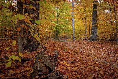 Photograph - Trail Square by David Heilman