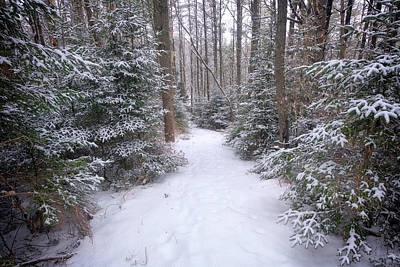 Photograph - Trail Through The Snowy Forest by Rick Berk