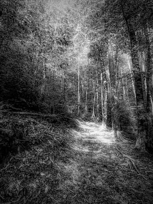 Antlers - Trail To Moore Cove Falls Black and White by Judy Vincent
