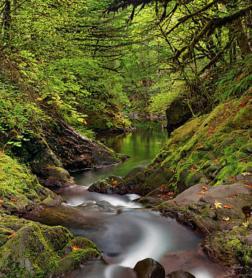 Photograph - Tranquil River by Leland D Howard
