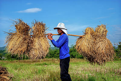 Lee Craker Royalty-Free and Rights-Managed Images - Transporting Bundles of Rice by Lee Craker
