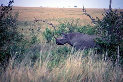 Painting - Travel, African Safari 1983, Africa, Wildlife, Rhino by Celestial Images