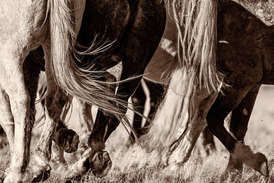 Photograph - Travelers by Mary Hone
