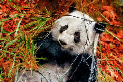 Photograph - Treasure Panda Bear by Blake Richards
