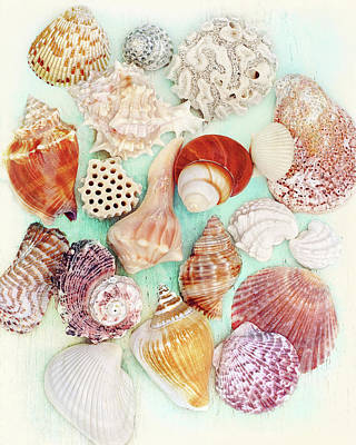 Photograph - Treasures From The Sea  by Kathi Mirto