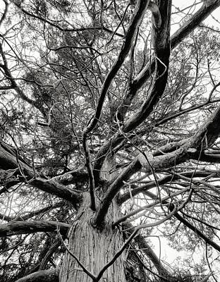 Photograph - Tree Abstract by Karen Harrison