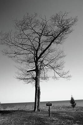 Photograph - Tree And Great Lake Bw by Frank Romeo