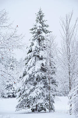 Photograph - Tree And Snow by Alana Ranney