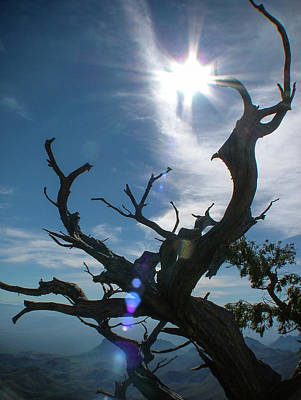 Photograph - Tree At Big Bend National Park by Philip Rispin