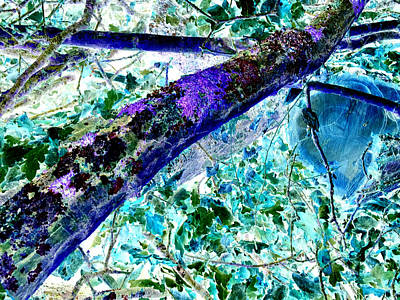 Photograph - Tree Branch Abstract Invert by Artist Dot