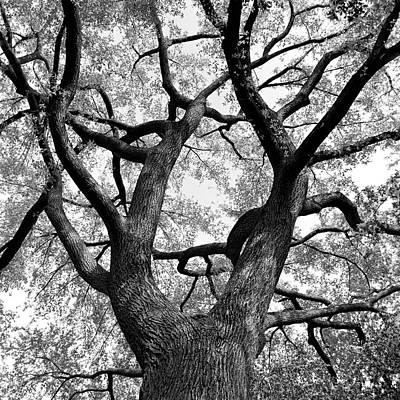 Branch Photograph - Tree Branches by Adam Garelick